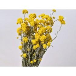 Bouquet Sanfordii Jaune 50cm