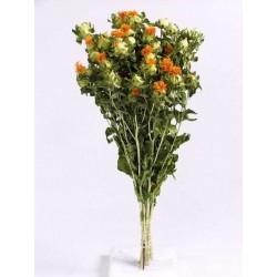 Bouquet Carthamus 65cm