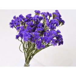 Statice Sinuata 45cm Violet foncé