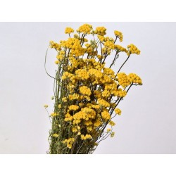 Bouquet Lonas 60cm