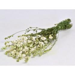 Bouquet Delphinium Blanc 65cm