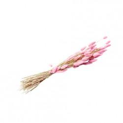 Bouquet lagurus - rose