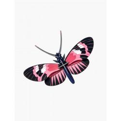 Papillon à ailes longues