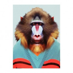Mini carte zoo - Babouin Mandrill
