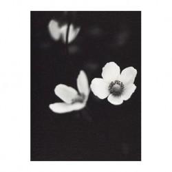Carte fleur - Fleur de pommier noir et blanc