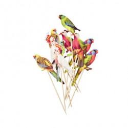 10 Pics perroquets