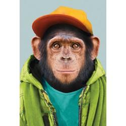 Carte zoo - Chimpanzé
